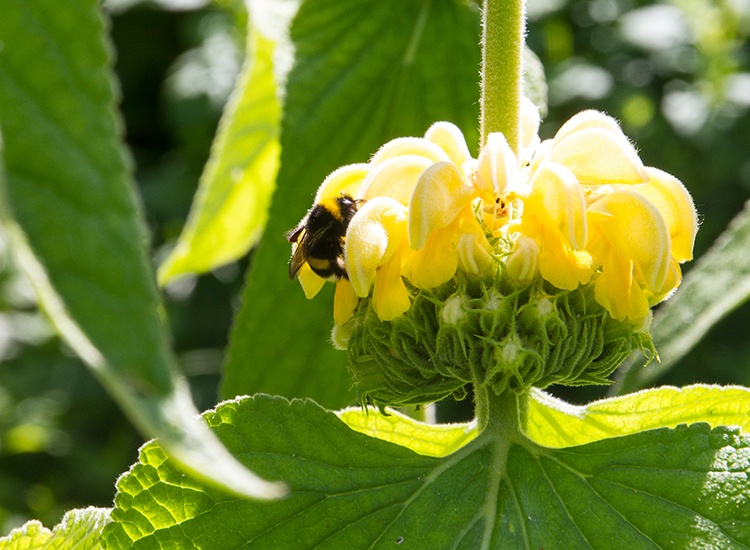 Hoveniersbedrijf-Loek-Barte-Tuinaanleg-Beplanting-Biodiversiteit-06