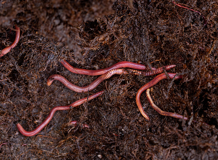 Hoveniersbedrijf-Loek-Barte-Tuinadvies-Biodiversiteit-01