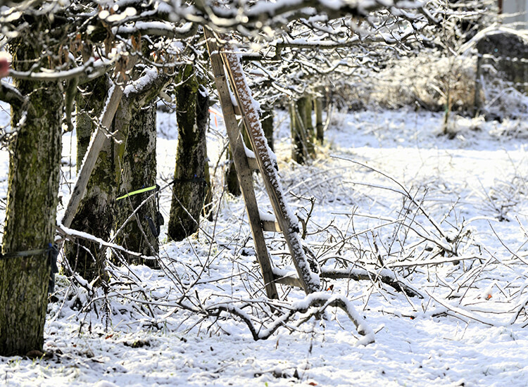 Hoveniersbedrijf-Loek-Barte-Tuinadvies-Winter-02